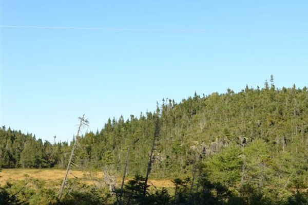 Newfoundland land for sale