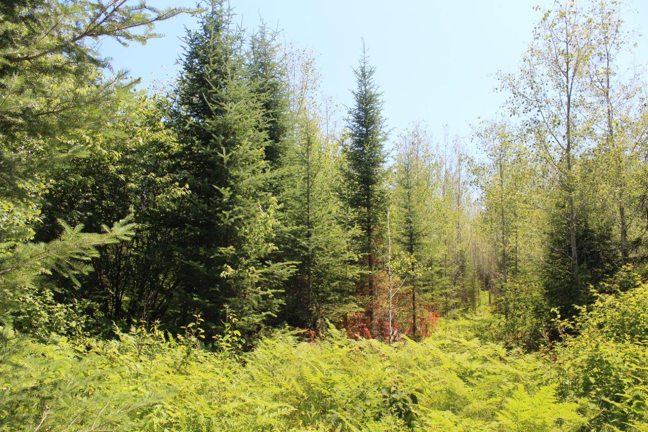 hunting and fishing property for sale northern ontario